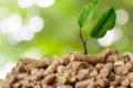 Moneta e biomasse: una strada alternativa